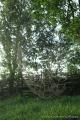 p7271205_feliratos_gomorszolos_43
